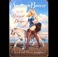 LEVRIER PIN UP CHIEN CHIENNE
